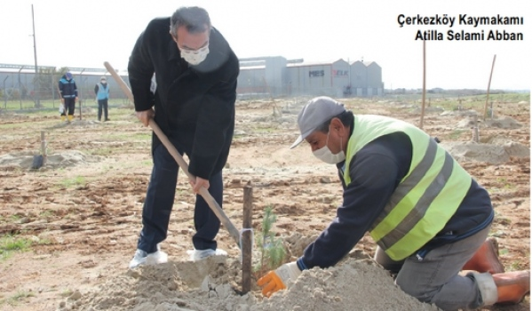 ÇOSB fidan dikim kampanyasına 350 adet fıstık çamı dikimiyle destek oldu