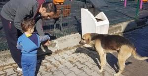 Minik öğrencilere hayvan sevgisi aşılandı