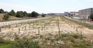 ÇOSB, yeni rekreasyon alanı projesine 3 bin fidan dikti