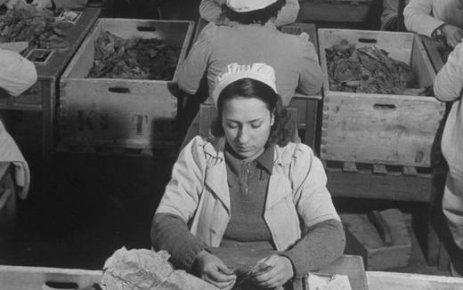 Sanayileşmenin en önemli adımı Cibali Tütün Fabrikası